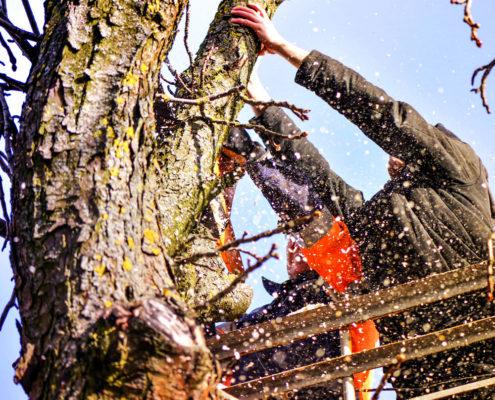 Boomverzorging in Friesland Hoveniers Sake van der Wal - Gecertificeerd ETW